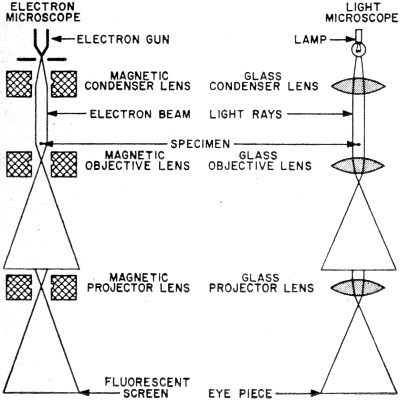 how are light microscopes and electron microscopes different