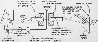 35888128257976453 likewise T8340340 Cigarette lighter fuse located together with Electronics Medicine March 1948 Radio Craft likewise  on all star radio system diagram